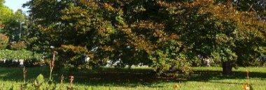 Faggio cavalcavia Borgomagno Territorio quartiere 2 380 ant
