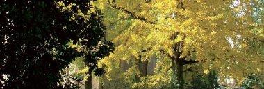 Giorna dell'albero