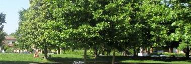 Parco Iris parchi verde alberi albero 380 ant