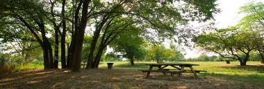 territorio quartiere 6 parchi parco verde alberi albero 380 ant