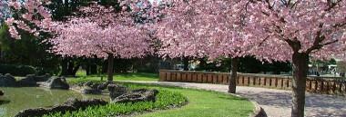 territorio quartiere 1 parchi parco verde alberi giardino albero giardini arena 380 ant